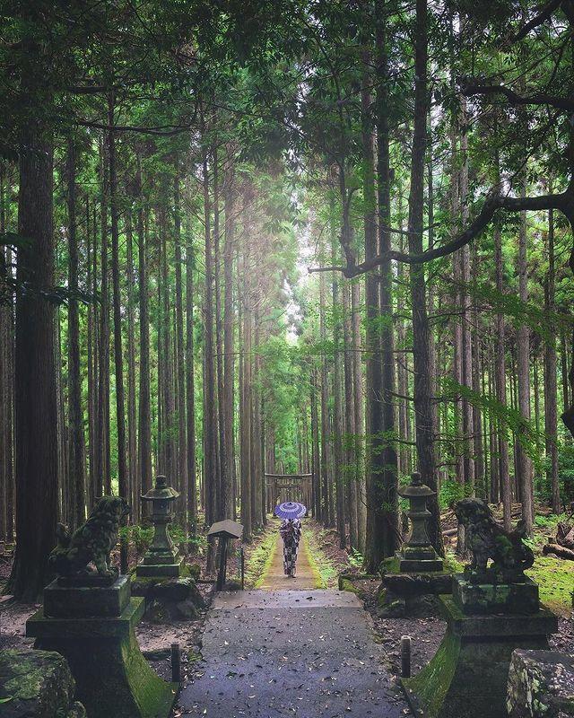 ・ [It's like an entrance to another world!! Kyoto / Keihoku Kamo Shrine] Kamo Shr...
