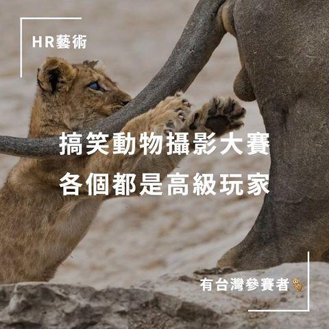 #HR藝術 #大家都好有才 👉🏻 搞笑動物攝影比賽又來啦!🙈 @ tag 喜歡看可愛動物的朋友 👉🏻 誰創辦的? 幾年前 野生動物攝影師 Paul Joyn...