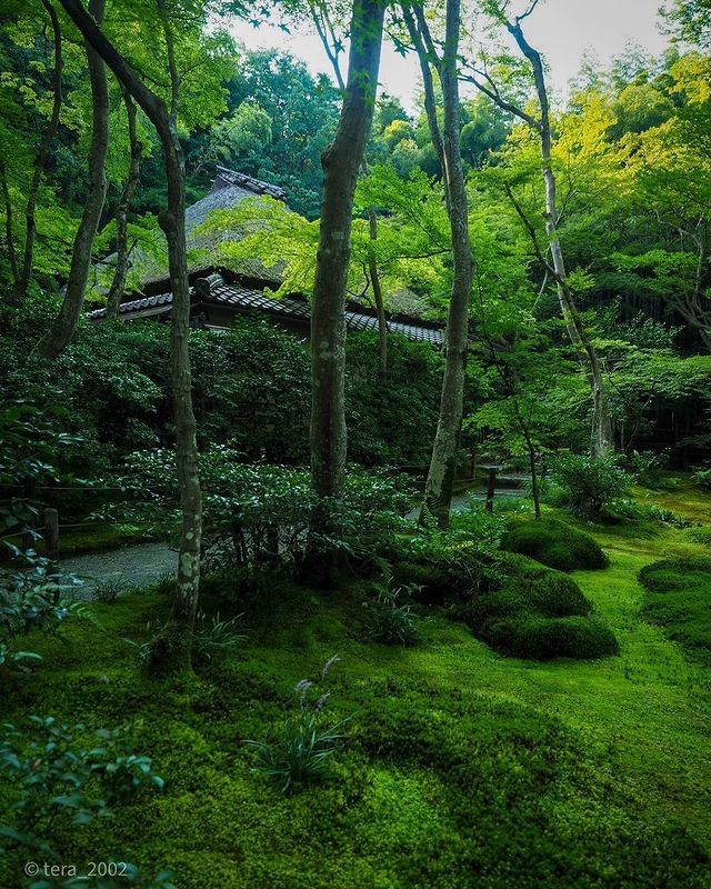 "・ [In Kyoto's Oku-saga location, discover Giou-ji Temple, known as ""A Nun's Tragi..."