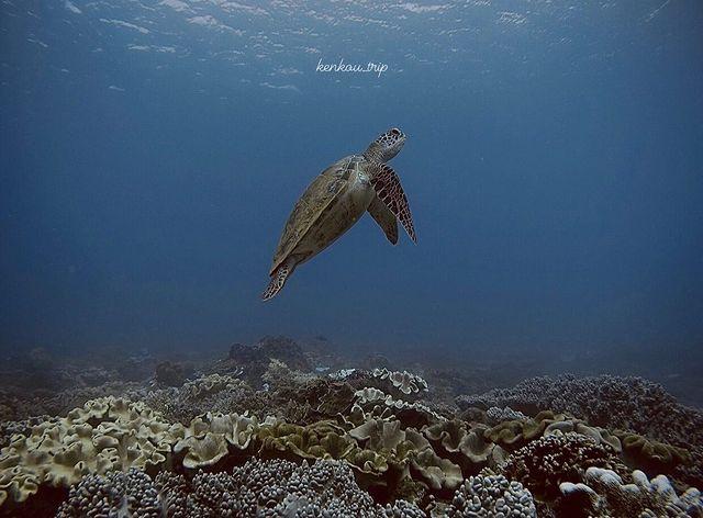 校正回歸6/16世界海龜日 World Sea Turtle Day 台灣目前最常見到海龜的地方應該是在小琉球了,在港口附近就可以見到 愛牠也要愛護牠的環境 ...