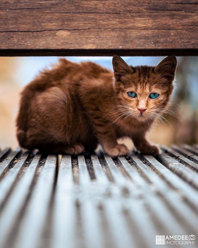 你只需要愛跟一隻貓.. All you need is love and a cat.. 🚩阿里山國家森林遊樂區入口觀景台 📍座標: GR52+FG Alish...