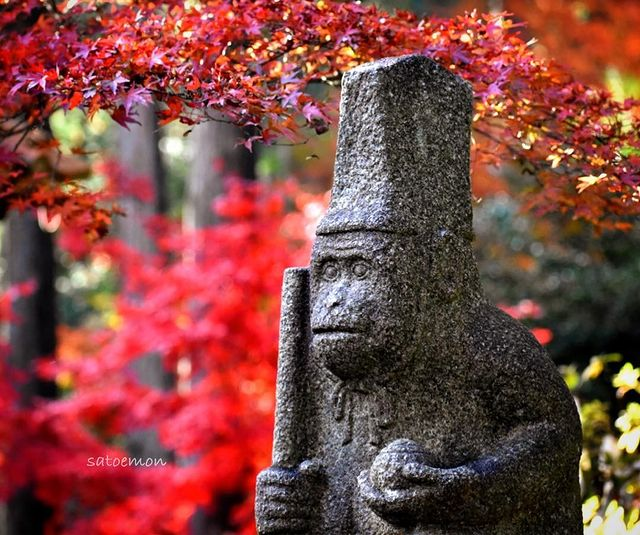 ・ [Sarumaru Shrine, a hidden spot for autumn leaves in Ujitawara, Kyoto] Sarumar...