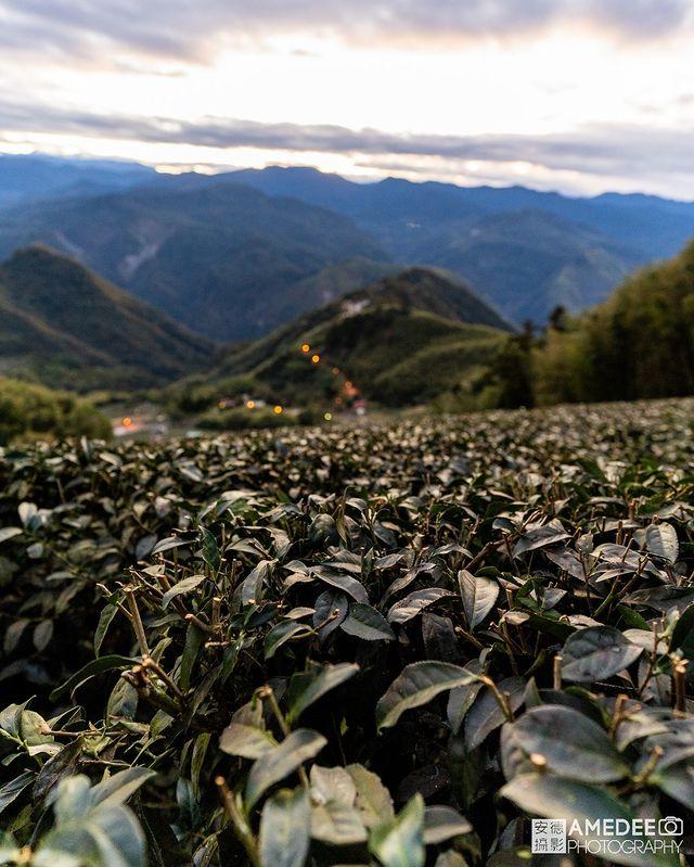 台灣茶非常有名,大家最喜歡哪一種? 綠茶、紅茶還是烏龍茶? 🚩二延平步道 📍地址: 嘉義縣番路鄉阿里山公路27號 ⏰開放時間: 24小時開放 #beatifu...