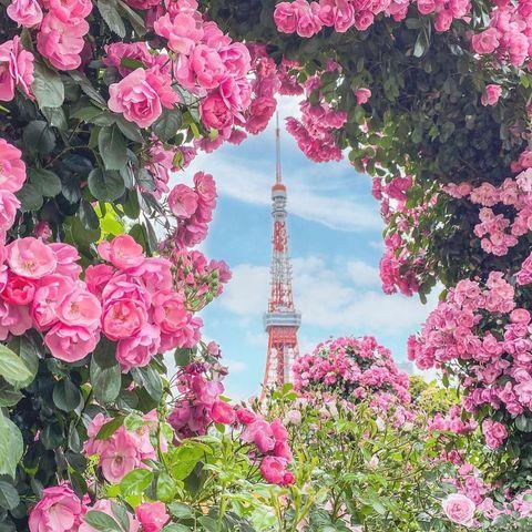 ⠀ 【Japaholic · 東京】 像是漫畫裡會出現的浪漫視角😍 套上了玫瑰花框的東京鐵塔實在太美🌹 ⠀ 📷哪裡拍:芝公園 🚃:三田線芝公園站 4號出口 ⠀ l...