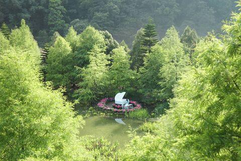 前晚傾盆大雨過後,清晨迎來了曙光,把落羽松森林照耀的透淨明亮,新冒出的枝枒在雨水的洗禮後、映著光更加翠綠,這是專屬於初夏清新的風景;我迫不及待來到池畔的鋼琴前,想...