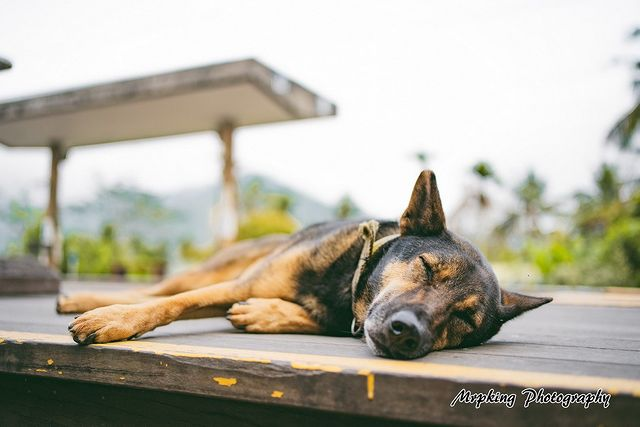 Sony α7 iii + Sony FE 35mm F1.8 . #狗狗 #狗 #狗狗的旅程 #汪星人 #dog #doglife #dogsofinsta...