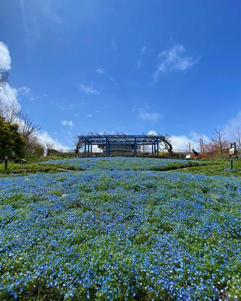 . 【印象派画家たちの美しい作品を庭園で再現 比叡山の山頂にある「ガーデンミュージアム比叡」】 比叡山の山頂に位置しているため、春から夏は市街よりも1か月ほど遅れ...