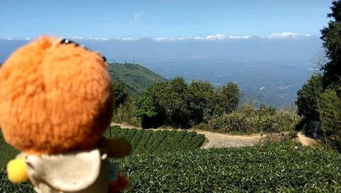 這條健行路線沿路風景真的美呆了! Amazingly beautiful scenery and tea fields along this hiking ro...
