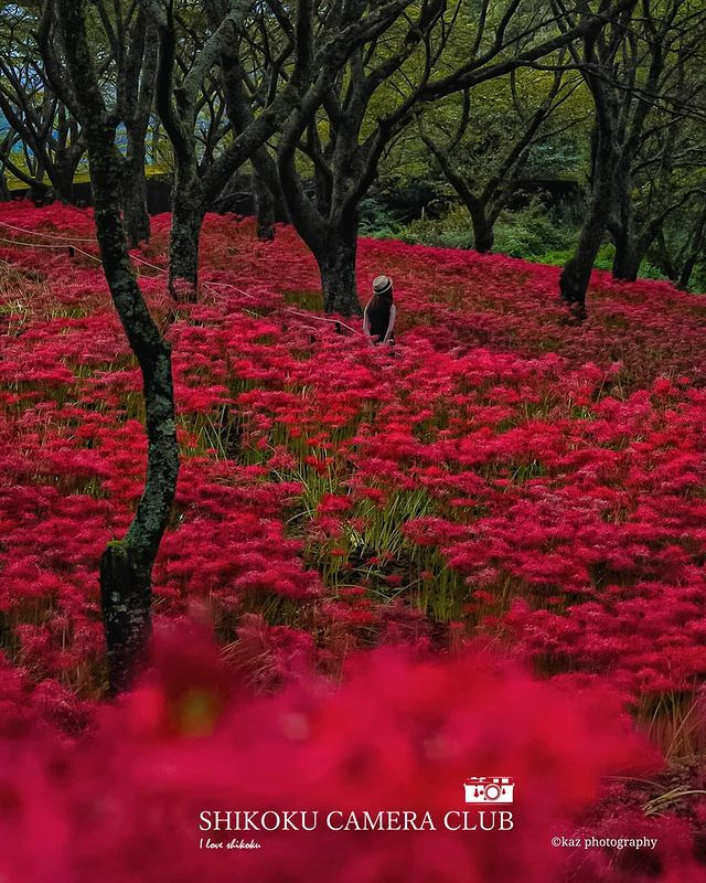 * * ー Photo Of The Day ー * 🏞四国の魅力をご紹介🏞 . ━━━━『素敵な四国の風景』━━━━━━━━ . Photographer: s...
