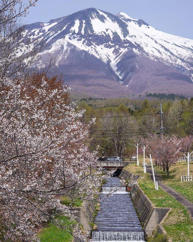 『積雪的岩木山與櫻花』 岩木山有津輕富士之稱,但圍著它繞了一圈後,發現只有幾個角度像富士山,真正的富士山才是零死角。 山邊的櫻花品種也有許多,在不同時期順次盛開。...