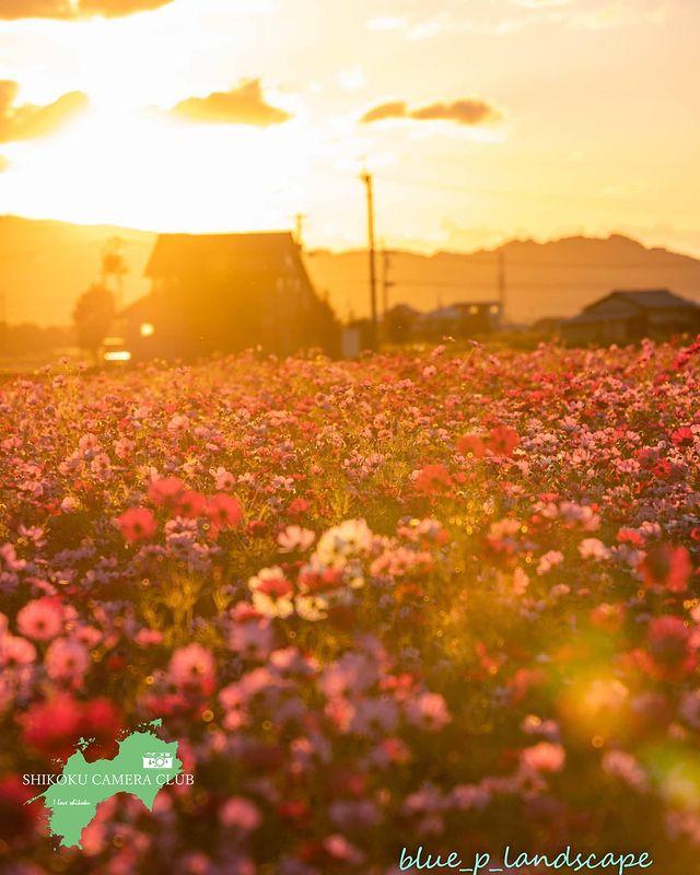 * * ー Photo Of The Day ー * * 🏞四国の魅力をご紹介🏞 * * ━━━━━『美しい四国の風景』━━━━━━━━━ . Photogr...